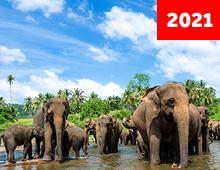 Lo Mejor de Sri Lanka